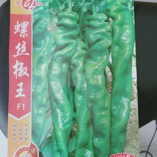 砀山县螺丝椒种子 果长25~28厘米,宽3~4厘米,果重60~120克左右