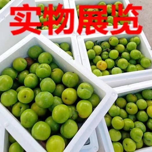 信宜市 青脆李三华李新鲜水果5斤包邮到家