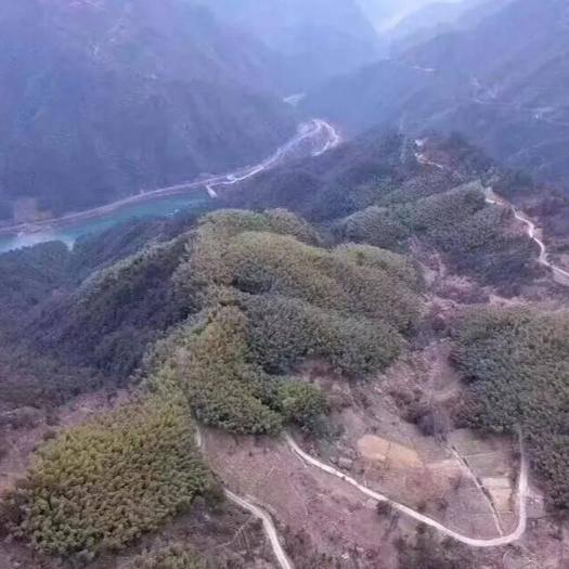 杭州山地 杭州鄉村海拔800米占地500畝種植觀光休閑項目