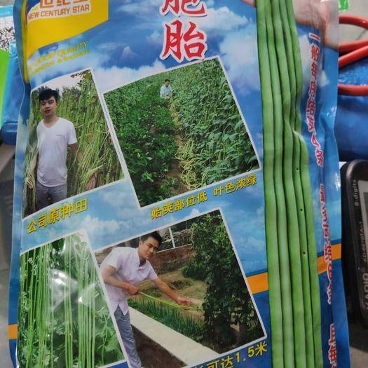 郑州中原区长青豆角种子 真长六胞胎青白条产量高耐低温耐热耐湿抗病强