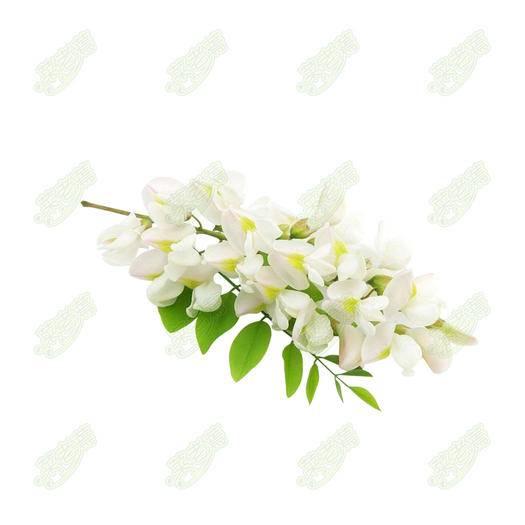 沧州沧县槐树花 (实在价)脱水槐花长期供货
