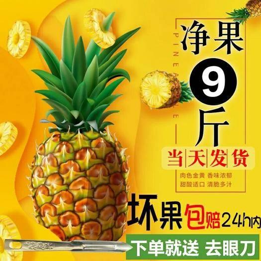 泉州晉江市海南菠蘿蜜 (壞果包賠)海南新鮮大菠蘿手撕香水菠蘿鳳梨5/10斤水果