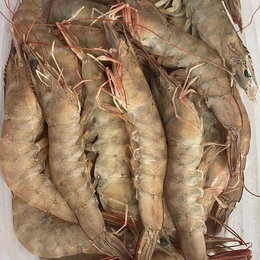 龙海市 白虾,白对虾,