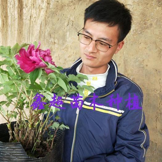 平邑县 金阁乌金绿宝石洛阳红牡丹,保证品种,绝对不是丹皮假牡丹!