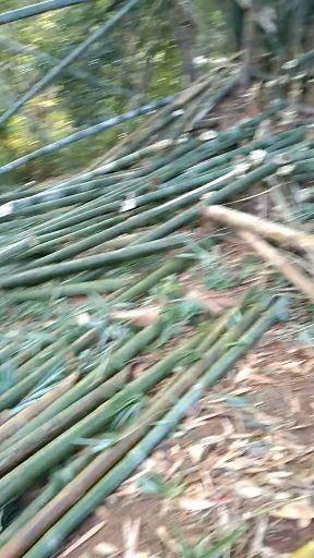 临沧耿马傣族佤族自治县 有没有老板想到我这边开发竹炭或是其他竹子产品的