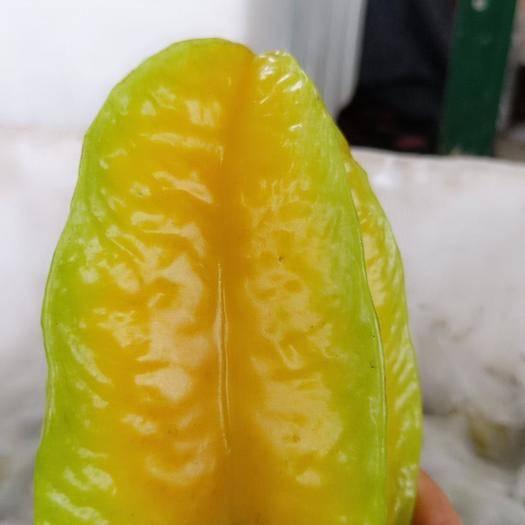 南靖縣 應季生鮮楊桃孕婦寶寶采摘3斤/5斤包郵