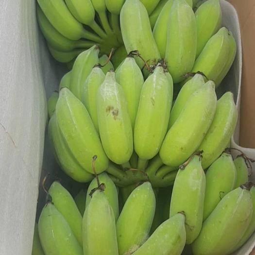 文山麻栗坡縣 西貢蕉粉蕉