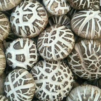 精选新花菇西峡花菇农家自产干货,肉厚味美