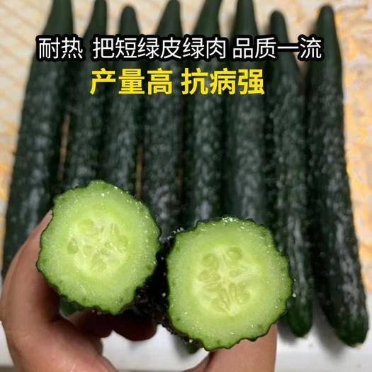 昆明 绿皮绿肉黄瓜种子,油亮型特高产量特抗病把短品质好,正宗瓜王