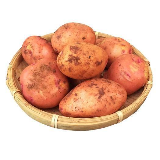 昆明 云南高原紅皮小土豆9斤新鮮蔬菜