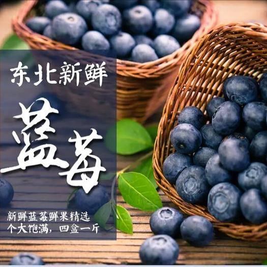 丹東寬甸滿族自治縣 丹東鴨綠江藍莓產地直發新鮮直達北陸綠寶石博霧各品種各規格