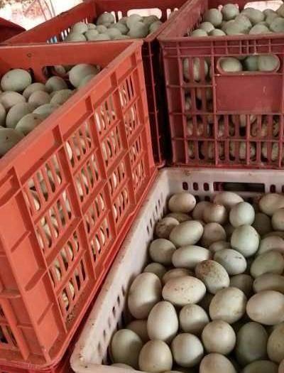 清遠清新區金定鴨蛋 食用 散裝