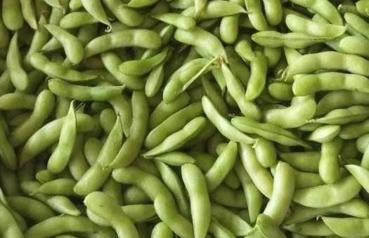 博白縣 毛豆,顆粒飽滿,顏色漂亮