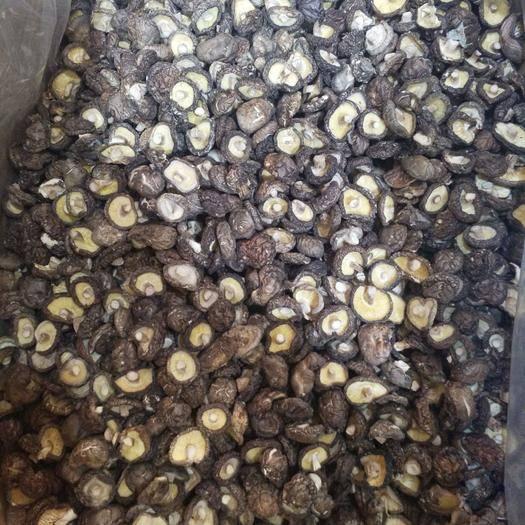 三明三元区 剪脚香菇