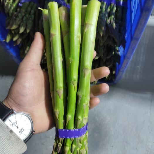 靈寶市 蘆筍新鮮純天然無公害