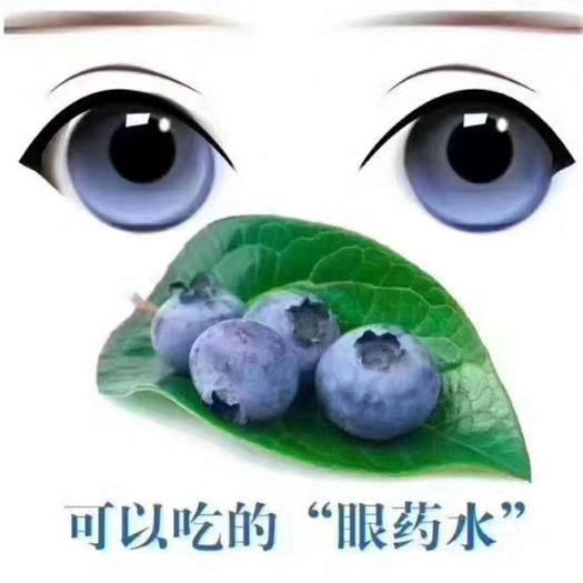 丹東振興區 丹東藍莓