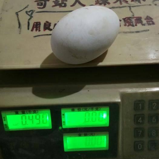 高唐縣 半斤左右的大雙黃鵝蛋
