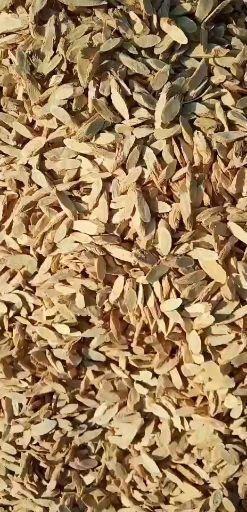 定西岷縣 黃芪片,喝了補氣,甘肅岷縣地道藥材。