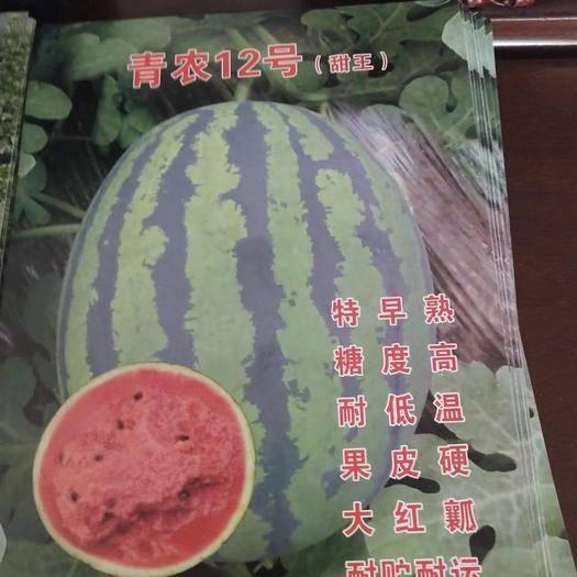 潍坊青州市 甜王西瓜苗