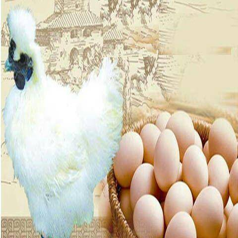 聊城東阿縣 農家散養白鳳烏雞蛋,40枚一箱,支持一件代發