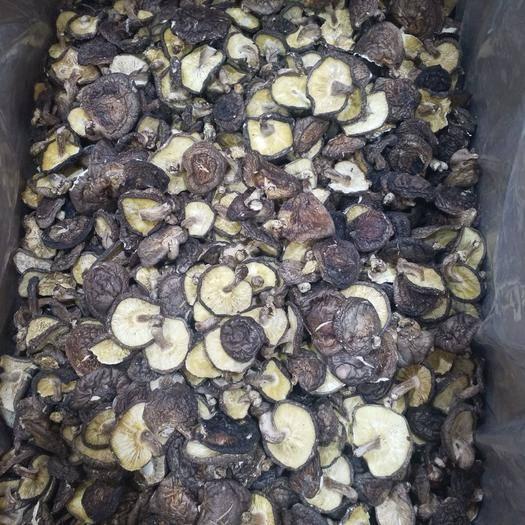 三明三元区普通香菇 便宜菇处理
