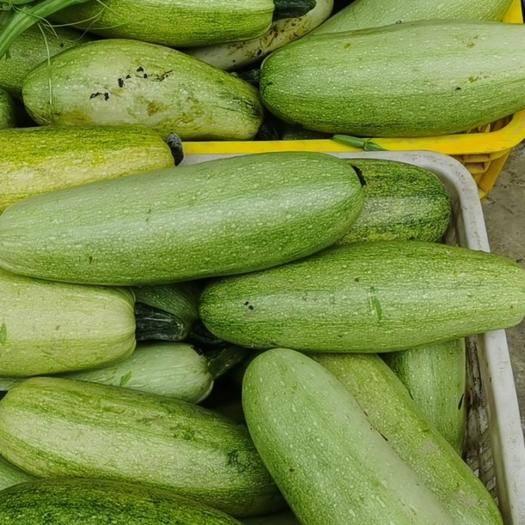 百色田陽縣 山泉水種大白菜,西葫蘆瓜