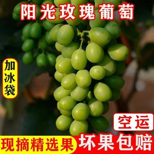 昆明 云南新鲜葡萄当季青提无籽青提阳光玫瑰现货包邮