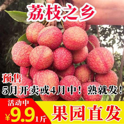 茂名 荔枝鮮甜肉厚核小開胃酸甜廣東夏季一件代發