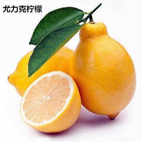 平邑县 柠檬苗,适合南北方种植,基地直销三包发货。