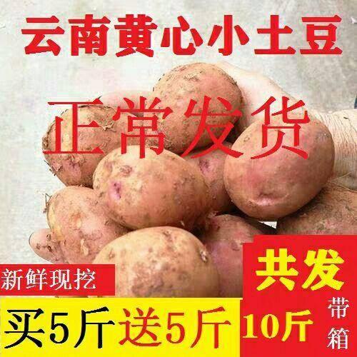 昆明 云南紅皮小土豆新鮮農家土豆新鮮馬鈴薯現貨5斤10斤包郵
