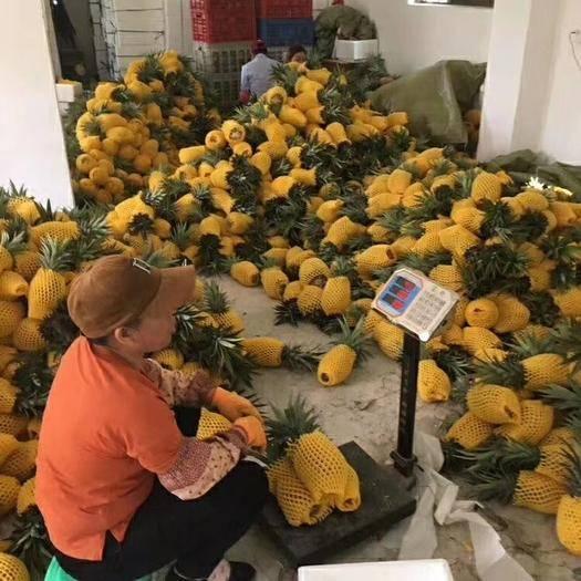 海口 海南金钻凤梨当季季新鲜水果5斤