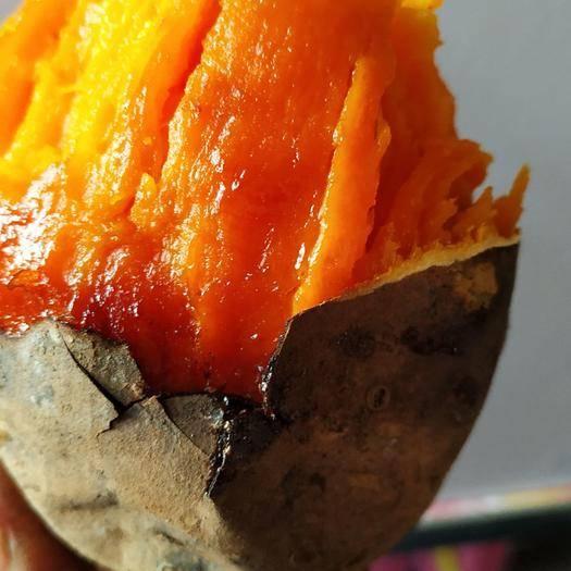 元氏县烟薯25号红薯苗 常规种(原种) ≥95% ≥90%
