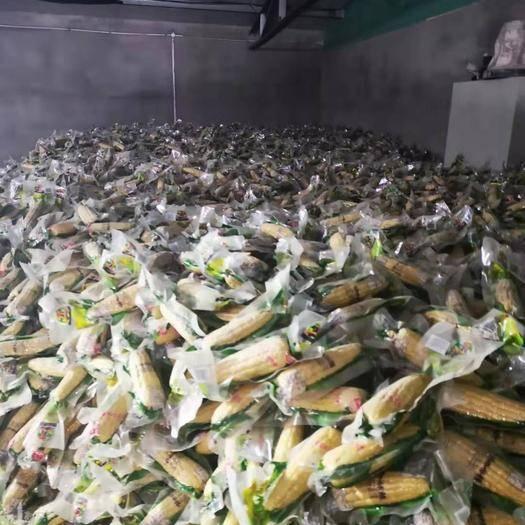 讷河市速冻糯玉米 12-18个月
