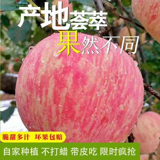 永寿县 【皮薄爽脆】苹果水果新鲜当季水果整箱10斤现季冰糖心红富士