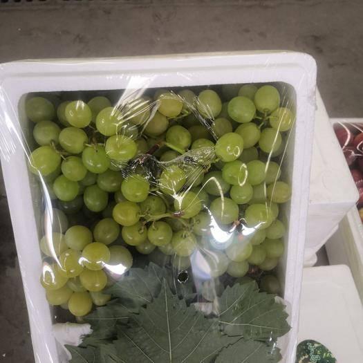 潍坊 新鲜葡萄上市了
