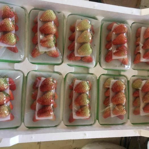 東港市 丹東九九牛奶草莓 誠招批發商
