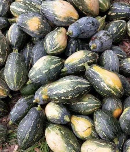 雷州市香芋南瓜 2~4斤