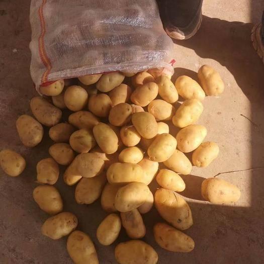 肥城市 1-3量2-4量,精品小土豆,專供超市,市場批發。外貿出口
