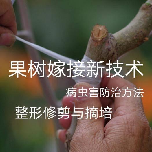 广州咨询服务 各种果树整形修剪与嫁接技术咨询病虫害防zhi 方法咨询