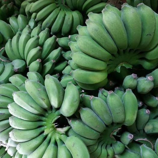 徐闻县 广东香蕉 小米蕉