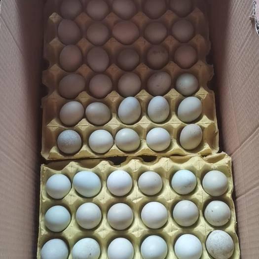 重庆 绿壳土鸡蛋