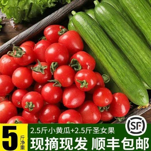 濰坊 圣女果小黃瓜現摘混裝小番茄新鮮蔬菜櫻桃小西紅柿水果黃瓜小柿子