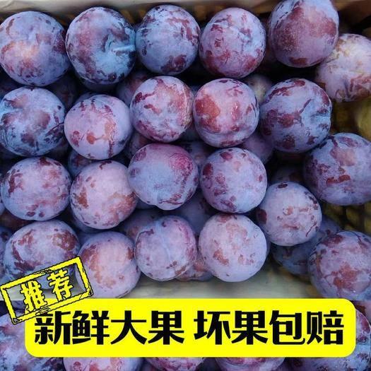 广州 新鲜现摘陕西黑玫瑰冰糖李李子水果孕妇应季水果黑布林代发包邮