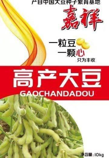 嘉祥县 黄豆、大豆