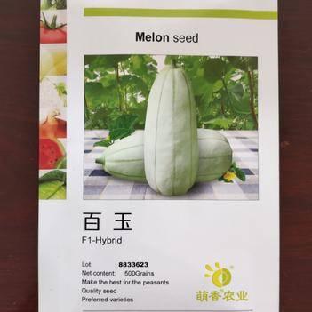 百玉甜瓜种子早熟肉质酥脆长梨形 果肉白绿色细腻多汁口感抗病