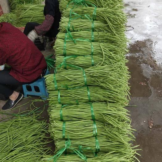 合浦縣綠翡翠長豆角 70cm以上