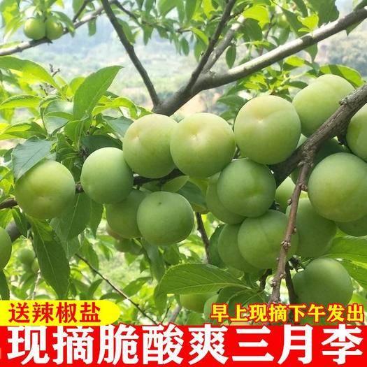 安阳县 新鲜李子三月李1/2/3/5斤包邮孕妇水果现摘三华李青脆李