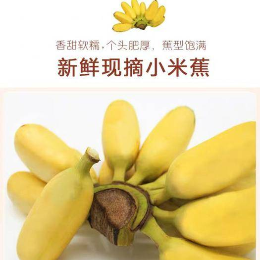 南宁 广西南宁小米蕉10斤/5斤箱当季水果包邮批发小米蕉