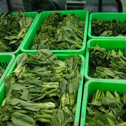綿竹市上海青菜苔