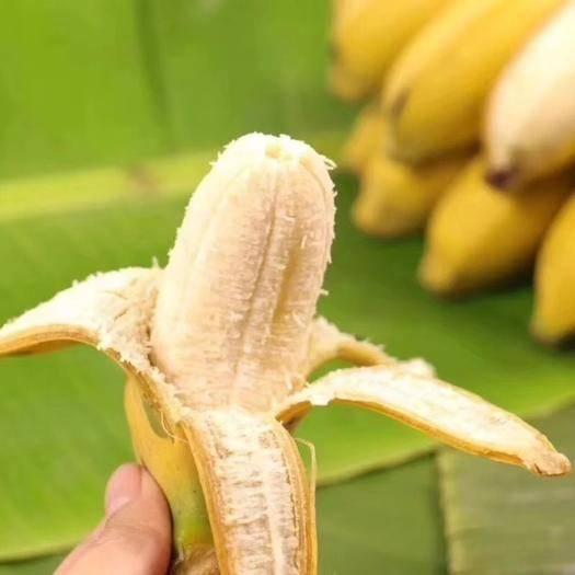 南宁 农家种植 现砍现发 广西南宁小米蕉 肉质细腻 酸甜软糯 小